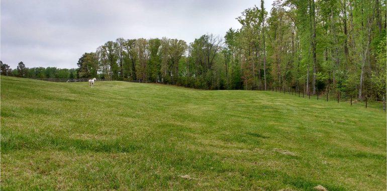 North Pasture at Respite Farm